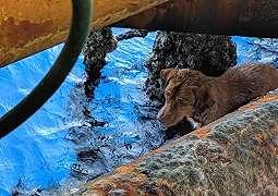 Anjing yang ditemukan di tengah laut, berhasil diselamatkan